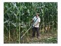 2018 hot selling rice wheat harvester mini harvester
