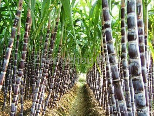 2018 Economic manual sugar cane juicer for sale 2
