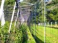 greenhouse net 40 mesh anti insect net 4