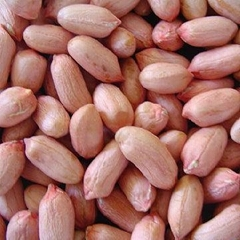 Sell peanut kernels, peanut in shell, blanched peanuts, roasted and salted peanu