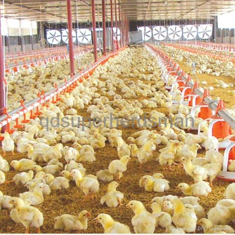 Full Set Automatic Poultry Equipment for Broiler 5