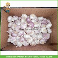 2017 China fresh normal white&purple garlic for export