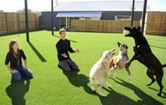 factory price soft feeling artificial grass for pets
