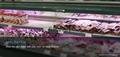 ERVAN Meat T8 LED Tube Pink Tube 30w 5ft for supermarket 11
