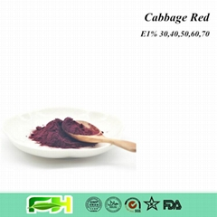 Natural Food Color Cabbage Red