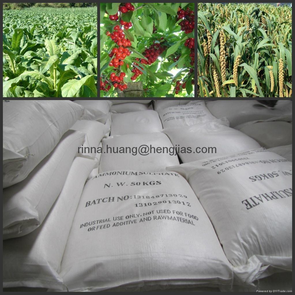 3102210000 / ammonium sulphate fertilizer 1