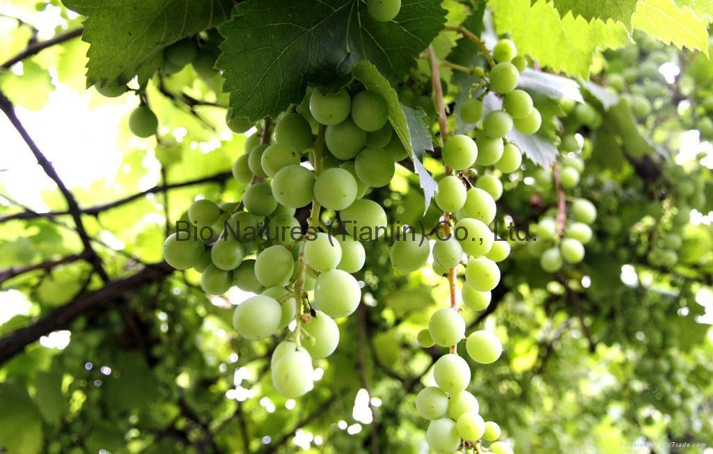 有機綠葡萄乾 NOP / EC889/2008 1