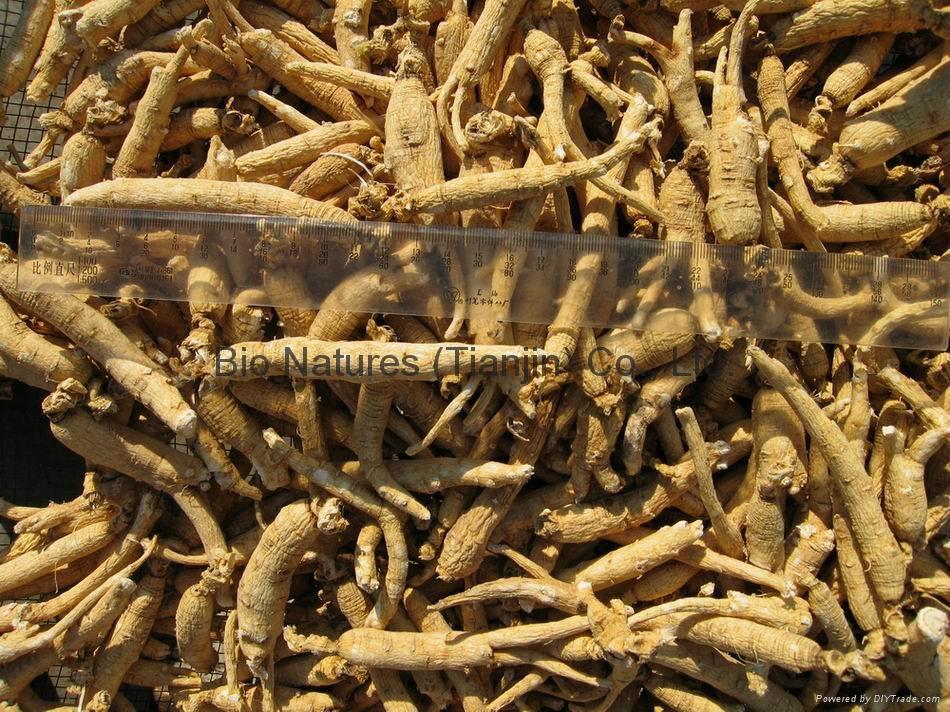 Certified Organic Panax Ginseng Root  NOP / EC889/2008 1