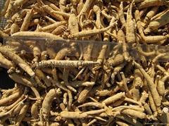 Certified Organic Panax Ginseng Root  NOP / EC889/2008