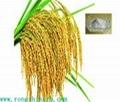 Natural Ferulic Acid 98% Rice Bran
