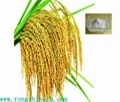 100% Natural Rice Bran Extract 99%
