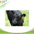 LF 125khz 134.2khz / HF 13.56mhz / UHF 860-960mhz Animal RFID Ear Tag for Cow Ca 3