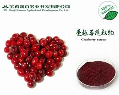 蔓越莓提取物 原花青素 25%