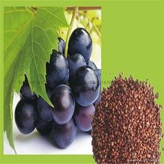 葡萄籽提取物 95%