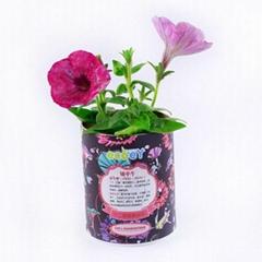 DIY种植微型花卉盆栽