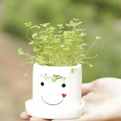 供應創意植栽桌面小花園