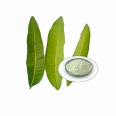 mango leaves extract and coconut as an antibacterial ointment This multitasking ointment changes state from solid to liquid with body heat, providing all of the concentrated benefits of pure botanical oils and extracts with the convenience and portability of a balm.