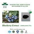 blueberry extract anthocyanidins 25%