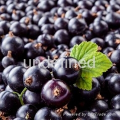 black currant extract anthocyanidins 25%