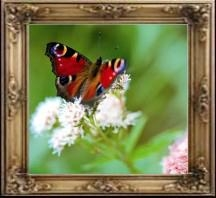 AP-5909-H  Glossy Water-resistance Textured Artist Canvas (Solvent & Eco solvent 5