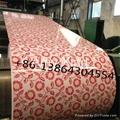 flower design ppgi color coated steel coil indian pakastian market  2