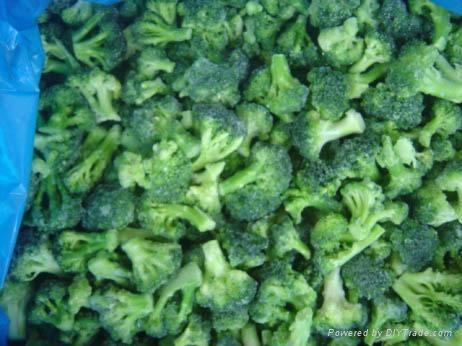 Frozen IQF Broccoli 1