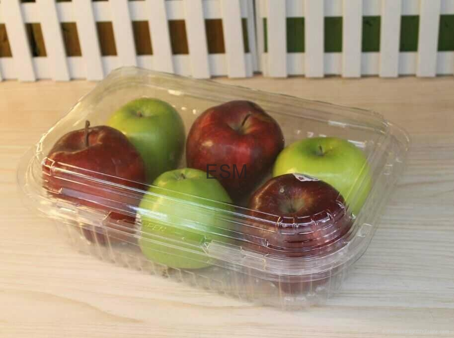 single-used  plastic transparent  food hinged clamshell for fruit  1