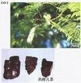 土貝母皂苷甲 1