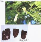 土贝母皂苷甲