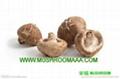 china Dried Shiitake Mushrooms 1