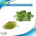 Broccoli extract Organic Broccoli Powder  1