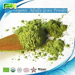Organic Oat Gass Powder/Oat Grass Juice Powder