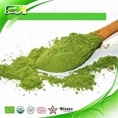 Organic Alfalfa Grass Juice Powder