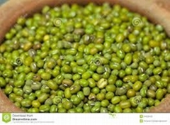 Quality Green Mung Beans