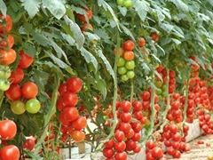 hydroponic and climate controllers for agricultural greenhouses