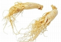 supply The herb ginseng for export