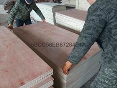 胶合板系列 贴面胶合板