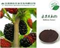 Mulberry P.E