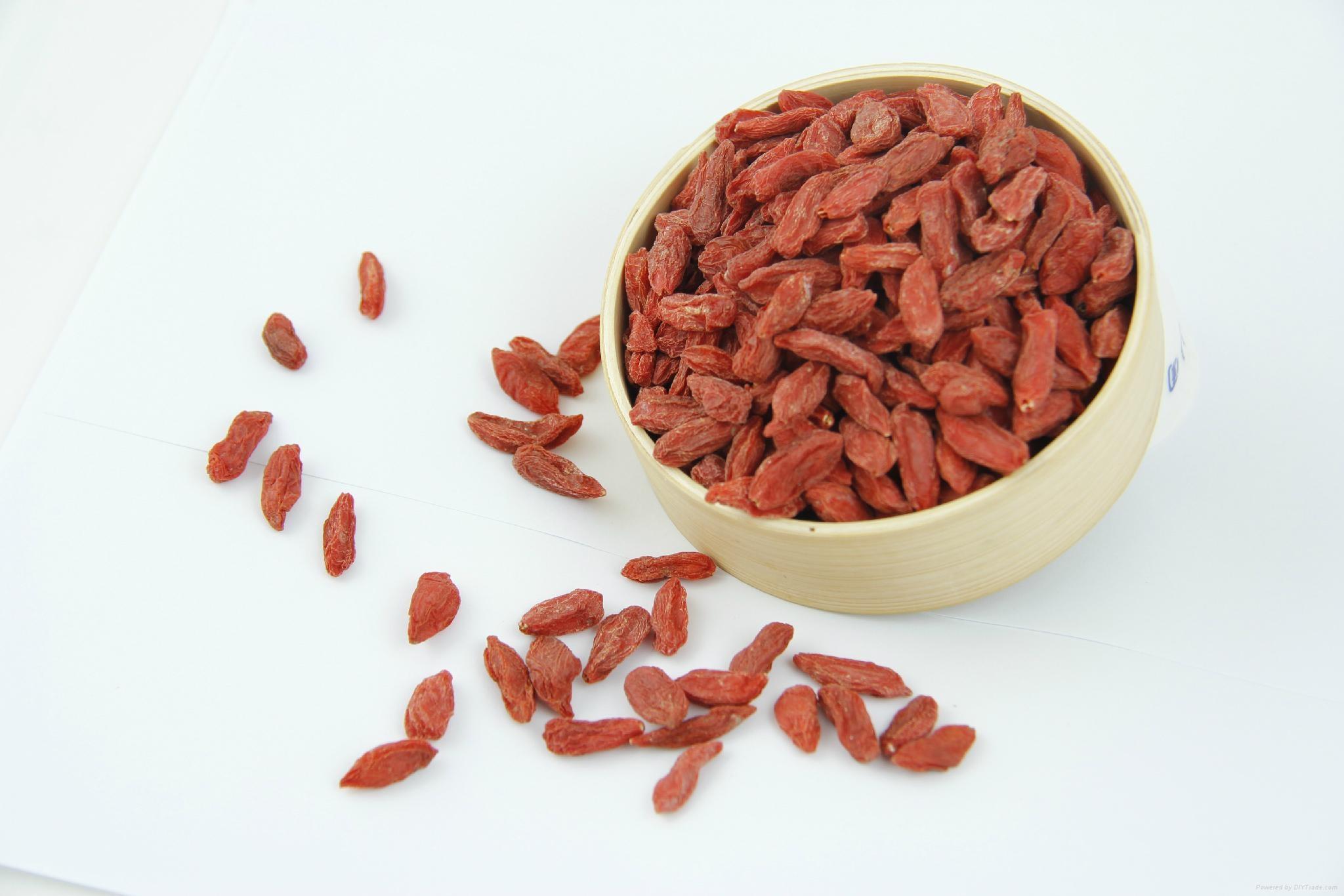 High quality Goji Berry dried fruit 380 grains/50G for sale Ningxia Goji berries 2