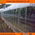 Orchards Anti Bird Net