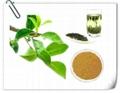 best green tea extract Green Tea Extract