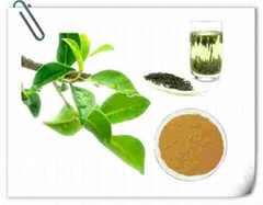 best green tea extract Green Tea Extract