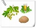 hops extract health benefits Hops