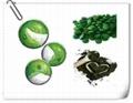 benefits of chlorella powder Chlorella