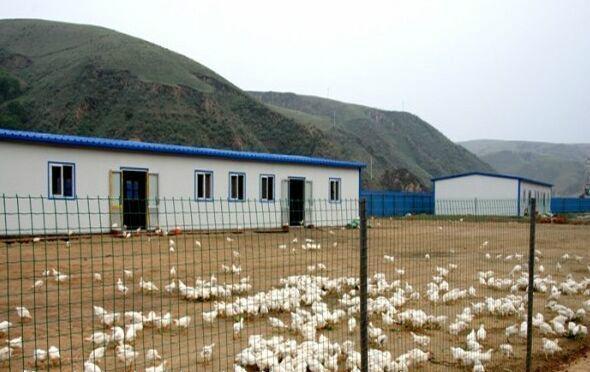 黄冈散养鸡围栏 1