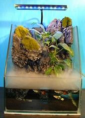 Aquarium background,3D aquarium