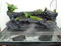 turtle home, terrarium landscaping for