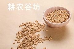 厂家供应降脂降压 强身健脑 耕农谷坊原料豆浆原料低温烘焙