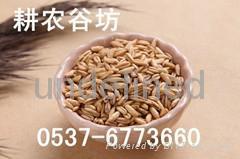 现磨豆浆原料批发/耕农谷坊豆浆包/低温烘焙/花生豆浆/小袋装