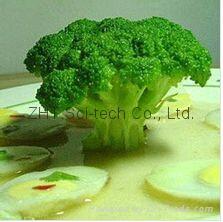 Factory Supply [Broccoli extract-Sulforaphane 6%] Mutiple Specification